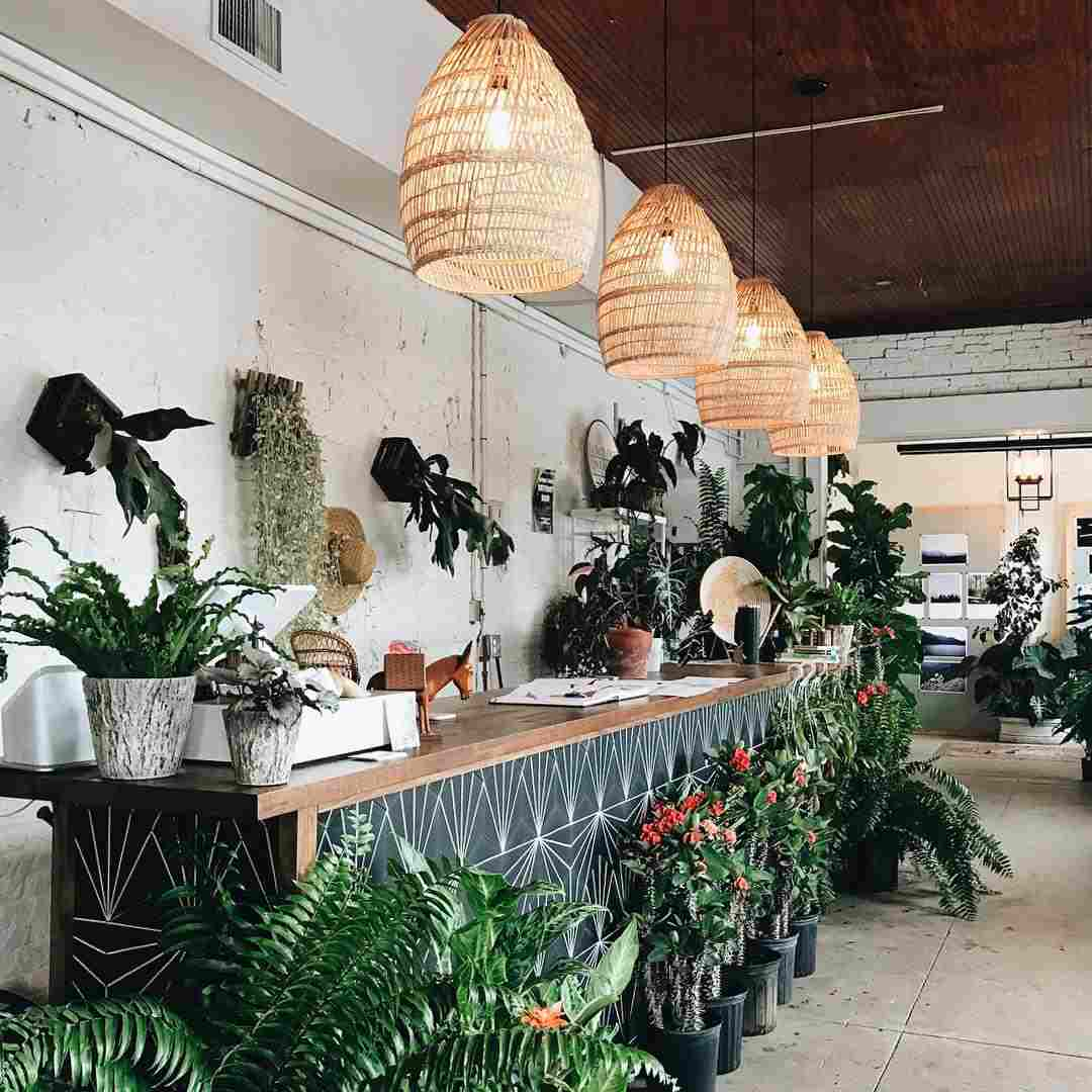 checkout counter plants to inspire hominess